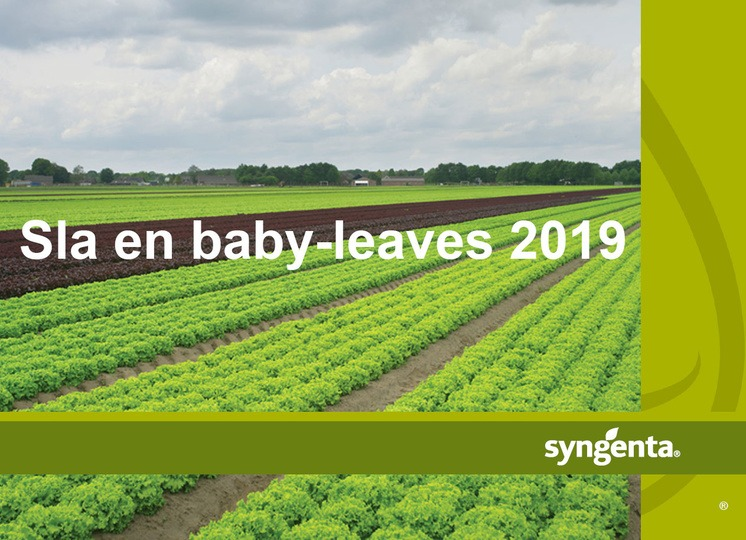 Brochure sla en baby-leaves 2019