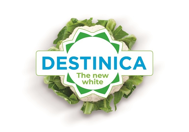 Destinica - the new white